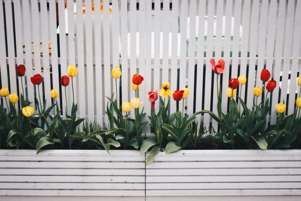 colorful tulips in front of a home